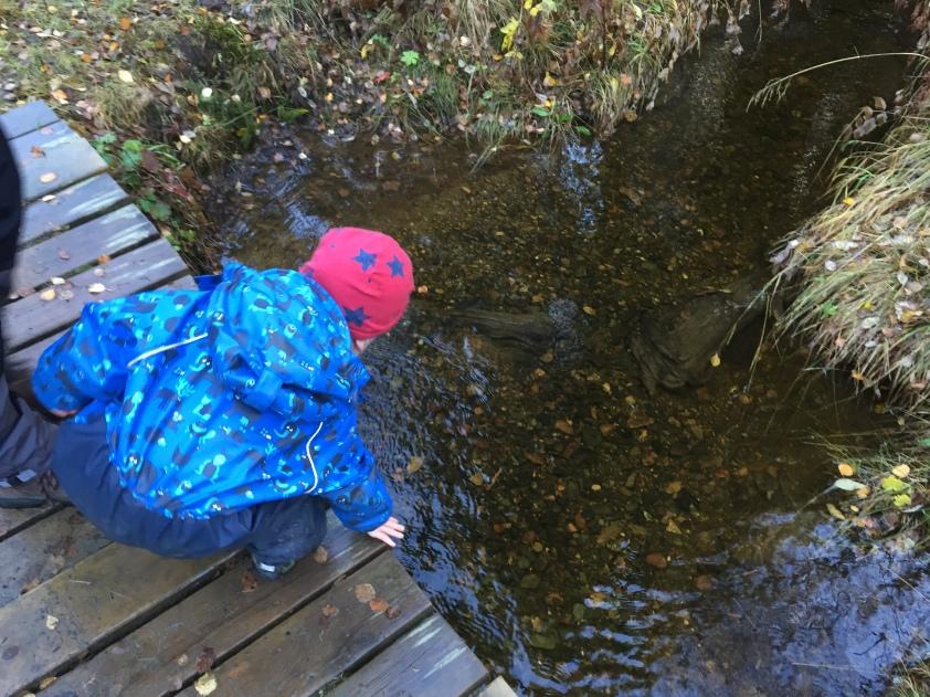 Sachen ins Wasser schmeißen verliert für dreijährige nie an Reiz. Vor allem nicht auf Brücken, wo man auf der anderen Seite gucken kann, wie sie wieder auftauchen.
